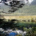mirror-lakes-nz-5.jpg